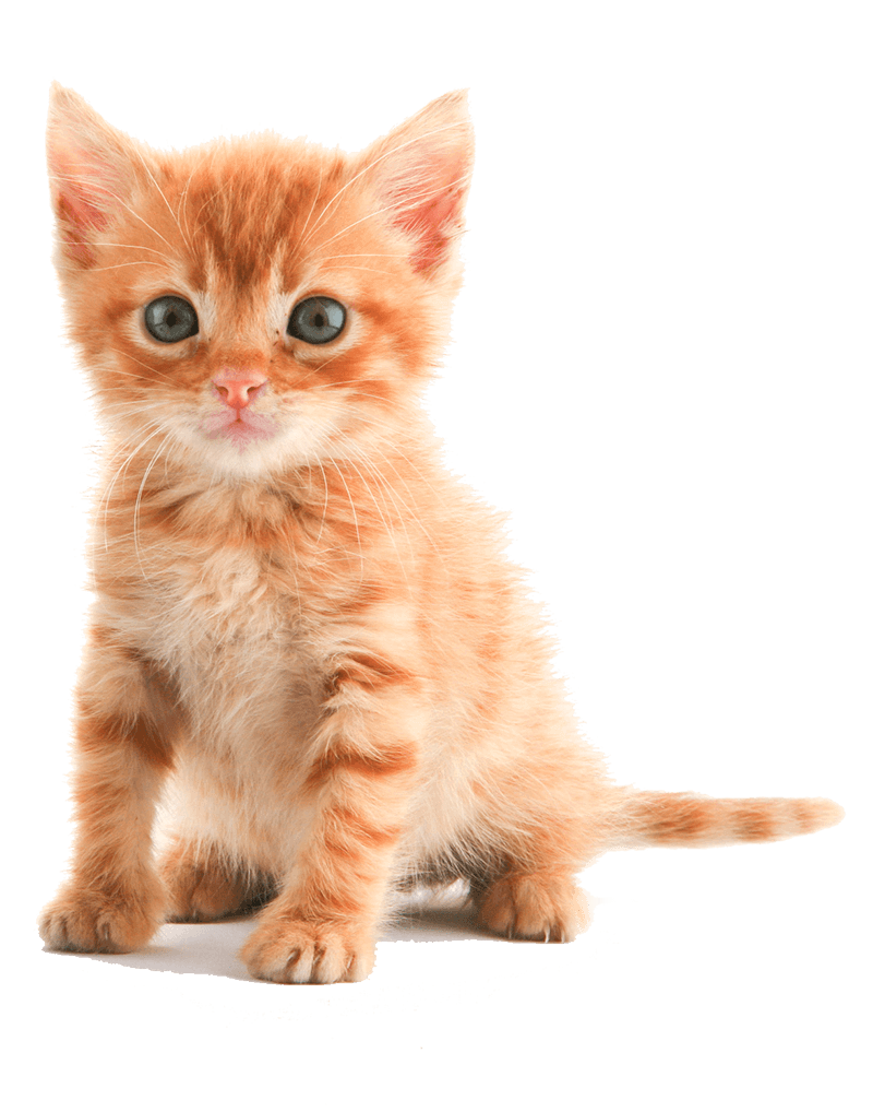 Kitten op de website